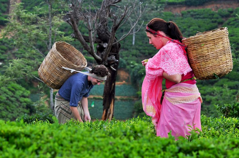 Heritance Tea Factory - Guests plucking tea